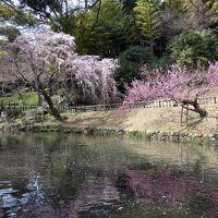 浜名湖ガーデンパークと浜松城公園の開花状況 3月17・18日