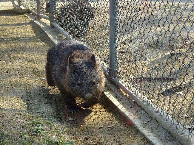 今回は関西方面への旅行。<br />まずは伊丹空港からほど近い池田市へ。<br />日本では数少ないウォンバットに逢いに五月山動物園を目指しました。<br />