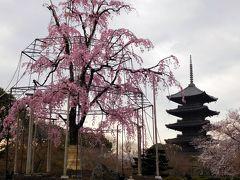 2017年京都 4月6日 その1 安井金比羅宮と東寺の桜