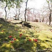 京都で梅を満喫