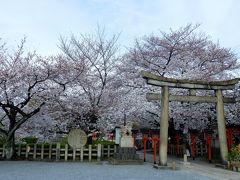 1017年京都 4月6日 その2 六孫王神社と梅小路公園の桜
