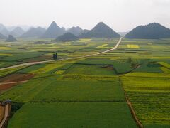 ハノイから陸路中国の雲南省へ 7 菜の花畑