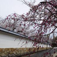 2017年京都 4月6日 その3 京都定期観光バスに乗り勧修寺へ