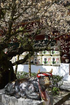 ★春休み・日本半分横断・回収の旅その2 一日めは福岡 おきよと太宰府とBEAT STATION篇★