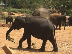 おばさん女子旅 IN スリランカ