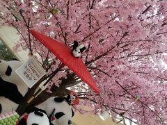 マダムのチープな東京散歩~六義園・上野~しだれ桜とシャンシャン