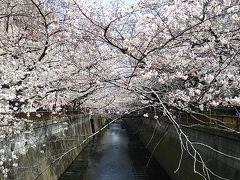 新幹線&青春18きっぷで行く東京2大花見スポットでの桜見物日帰り旅