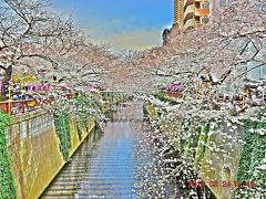 【東京散策78-2】桜満開となった大混雑の目黒川を早速歩いてみた ≪昼編≫