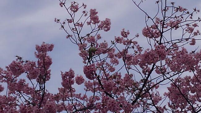 以前の職場の仲間と一応女子会。友人が予約してくれた湯島天神近くのスイス料理レストランでのランチの後、桜に誘われ、ほろ酔い気分で上野にお花見と繰り出しました!久し振りに人混みに身を委ねた目にお腹に心に美味しいごちそうをいただいて満足した半日の東京プチ旅行でした!