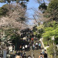 東急のローカル線?桜満開間近の東急多摩川線、池上線午後から遊ぼっ!のツアーなり