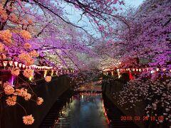 【東京散策78-3】 桜満開となった大混雑の目黒川を早速歩いてみた ≪夜桜編≫