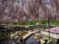 観光バスで巡る 2大花の名所 #3 - 花の芸術村 足利フラワーパーク