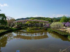 観光バスで巡る 2大花の名所 #4 - 足利フラワーパーク うす紅橋
