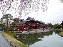 2017年京都 4月6日 その7 京都定期観光バスで平等院に行きました。桜も咲いてきれいでした