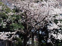心の安らぎお散歩(2018年 杉並区 善福寺公園をお散歩 リベンジ Part1)