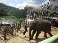 おばさん女子旅 IN スリランカ 3