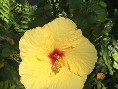 ハワイアン航空で行く3泊5日ハワイ☆2day