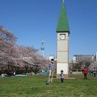 桜が満開の横十間川親水公園の周辺散策