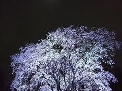 東京散歩2018(六義園のしだれ夜桜)