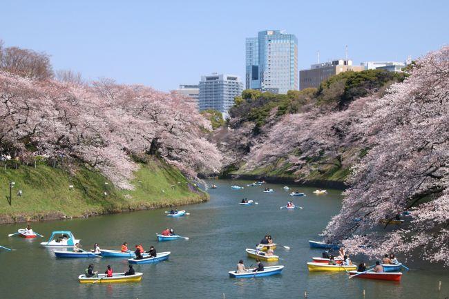 今年はどこの桜を見に行こうかな?!<br />なんて考えていたら、東京は桜が満開のニュース。<br />たまたま愛車の12ヶ月点検で実家に帰省していたので、この機会を逃すわけにはいきません!<br />せっかくなので、東京の桜の名所を巡れるだけ巡ってみようかと(´∨`*ゞ♪<br /><br />絶対に行きたかった千鳥ヶ淵をメインに、地図を眺めながら候補をリストアップ。<br />とここで、母親から耳寄りな情報!毎年春と秋の1週間程だけ皇居の坂下門から乾通りに入ることができるとか。<br />一度も皇居に行ったことがないし、滅多に入れない貴重な場所なので行ってみることに決定!<br />千鳥ヶ淵も皇居といえば皇居だし、この周辺の桜の名所を巡ってみることにしました。<br /><br />東京桜の名所巡りのルートは<br />靖国神社→千鳥ヶ淵→皇居坂下門→芝公園→目黒川<br /><br />当初の計画では、日比谷公園、新宿中央公園も計画していましたが、さすがにハードすぎて、途中で変更となりました…(笑)<br />撮影枚数は521枚。旅行記は3部に分けての作成となります。<br />お時間ある方、ご興味のある方、引き続きお付き合いのほど宜しくお願い致します。<br /><br />その2 ~皇居 坂下門編 ~ はこちらから ↓↓↓<br />https://4travel.jp/travelogue/11342915<br /><br />その3 ~ 芝公園と東京タワー・目黒川編 ~ はこちらから↓↓↓<br />https://4travel.jp/travelogue/11343216
