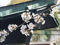春爛漫の桜を愛でる ー 町田とその近郊を歩く