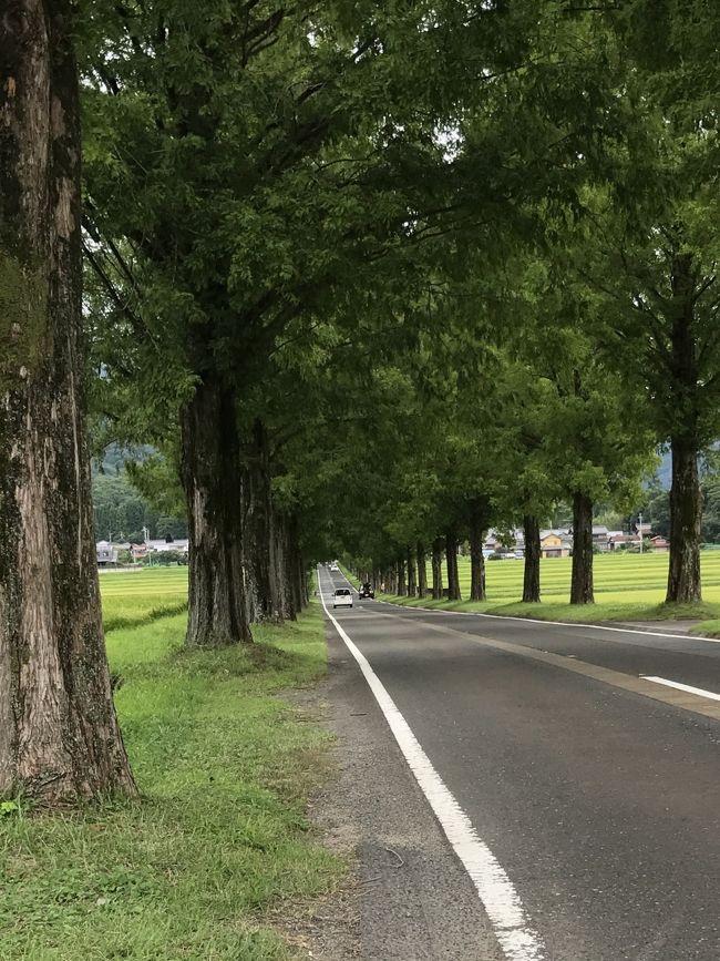 せっかくお休みなのでパパさんとドライブに出かけました。マキノ高原のメタセコイア並木が綺麗だと聞いて行ってみることに。奥比叡ドライブウェイを走り、琵琶湖沿いをドライブしました。<br /><br />2017年8月14日(月)<br />自宅⇒マキノ高原メタセコイア並木⇒奥比叡ドライブウェイ⇒比叡山延暦寺(横川)⇒白ひげ蕎麦⇒自宅