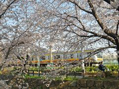 出勤前に桜散歩@二ヶ領用水