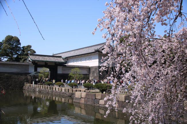 ブララブコー 「一網打尽!東京桜の名所巡り その2 ~皇居 坂下門編~」
