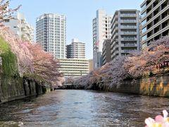 桜さくら  都内お花見スポットへ遊びに行こう!(・ω・)/♪