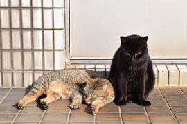 ★春休み・日本半分横断・回収の旅その5 三日めは福岡 能古島と猫と初博多屋台篇★