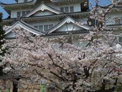 桜 咲きMAX!福山城 2018