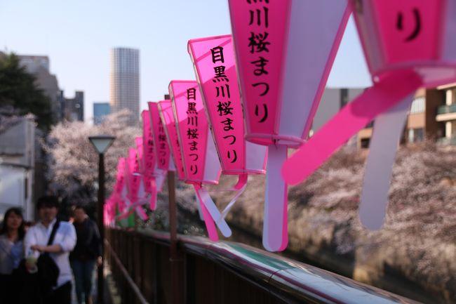 ブララブコー 「一網打尽!東京桜の名所巡り その3 ~芝公園と東京タワー・目黒川編」