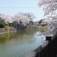 3/29 郡山城址の桜は満開でした。