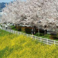 お花の饗宴!春爛漫の京都山科へ☆