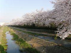 旧久喜市の桜スポットを巡る・・・6-1香取公園の桜