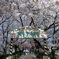 日光街道を歩く(4) 幸手〜栗橋、権現堂堤の桜と菜の花