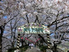 日光街道を歩く(4) 幸手~栗橋、権現堂堤の桜と菜の花