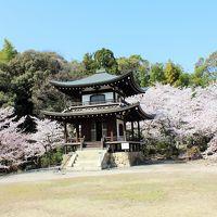 今日は晴れ♪桜は満開♪♪それなら1人でお出かけしちゃおう!2018年「そうだ京都、行こう」キャンペーン寺院の勧修寺へ