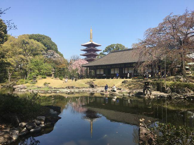 3月末日、シニアな母とミドルな姉妹の3人で、浅草花見散歩に行って来ました。