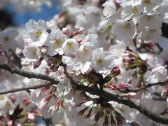 上野公園でお花見さんぽ