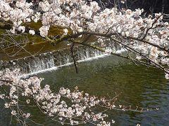 夙川公園へ満開の花見に出かけました 中巻。