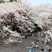 桜に包まれた山崎川 四季の道をお散歩 おいしい紅はるかの焼き芋 Petit gouterのスイーツ&ジャム 個性が光る「かるだもん」のカレー
