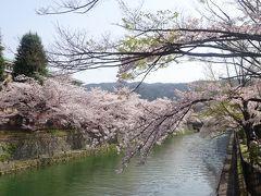 京都は桜満開、お花見日和の週末