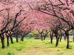 春色を楽しみに~花桃と桜が楽しめる古河総合公園~