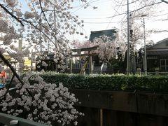 旧久喜市の桜スポットを巡る・・・6-3 愛宕神社周辺の桜