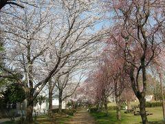 旧久喜市の桜スポットを巡る・・・6-4 吉羽公園のしだれ桜