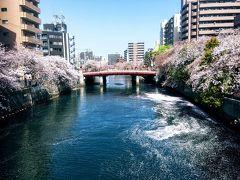 大岡川プロムナードの桜巡り 弘明寺から日の出町まで