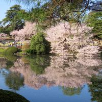 そうだ花を見よう!!〜満開の桜を見に皇居から新宿御苑まで〜