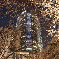 東京桜ホロホロ(散歩)その2