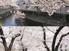 小さな旅 都電荒川線で桜めぐり(飛鳥山公園・神田川)2018 Sakura tour by Tram Arakawa Line/Asukayama and Kandagawa